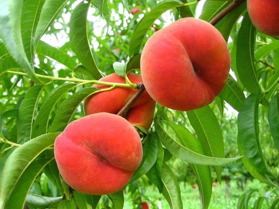 fruta ecológica Bio-Lobrot